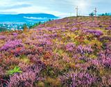 Summer heather flower hill and misty morning country view behind
