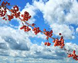 Red Berries And A Blue Sky