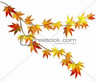 Autumn tree branch