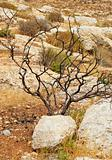 Dry Tree
