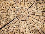 Tree Rings With Cracks