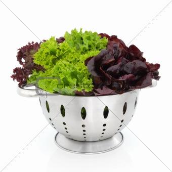 Tricolour Lettuce