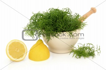Fennel Herb and Lemon