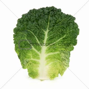 Savoy Cabbage Leaf