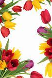 Tulip Flower Border