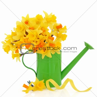 Daffodil and Narcissus