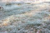 Frozen grass with hoarfrost
