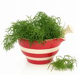 Fennel Herb