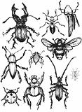 beetle vectors