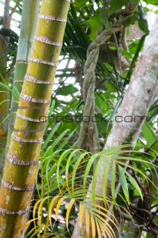 tropical pristine rain forest background
