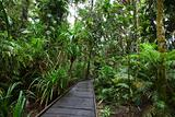 boardwalk in tropical rain forest