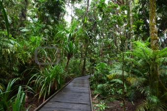 boardwalk in tropical rain forest