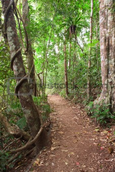 rain forest trail Tablelands Australia