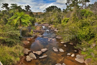 creek and fern trees in Australian rain forest