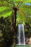 tree fern and waterfall in tropical rain forest paradise