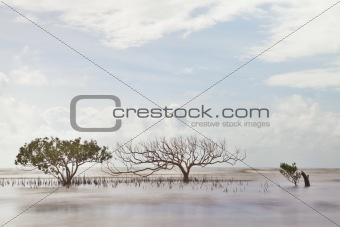 mangrove tree in blurred sea