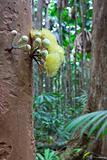 tree flower rain forest