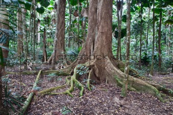 majestic trees in nature reserve