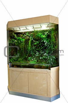 terrarium for tropical rainforest pets