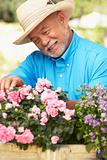 Senior Man Gardening
