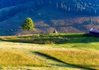 Summer mountain grassland landscape