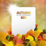 Vector autumn background with white card