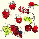 Stylized fruit and berries illustration