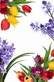 Spring Flower Border