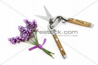 Lavender Herb Flowers and Secateurs