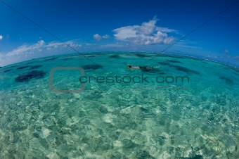 Fish-eye view - Snorkeling the ocean, Tahiti