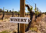 Winery Sign With Old Vines