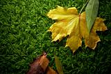 Autumn fallen leaves on green carpet, conceptual shot