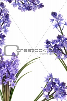 Bluebell Flower Border
