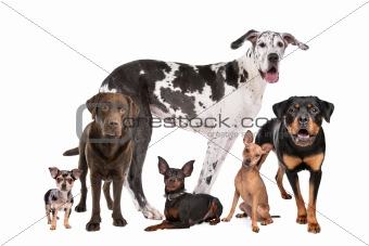 large group of dogs