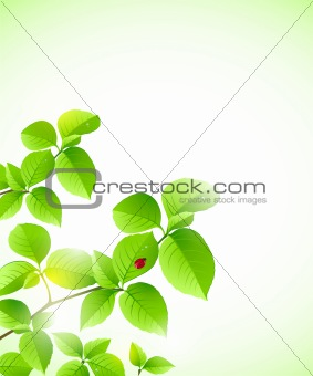 background with green branch