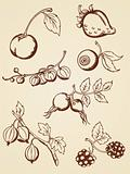 hand drawn vintage berries