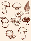 set of vintage forest mushrooms