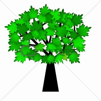 Green Leaves on Tree in Summer
