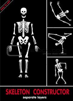 Skeleton constructor