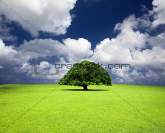 single old tree on the grass field