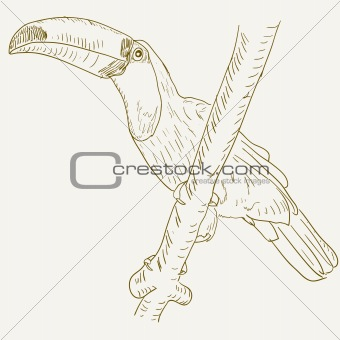 Toucan bird sitting on a tree branch.