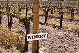 Winery Sign In Vineyard