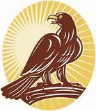 Eagle perching on branch sunburst