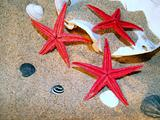 Starfish and shells