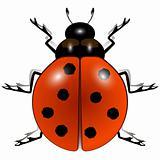 ladybug against white