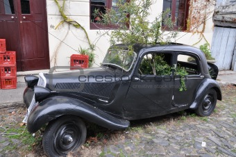 BLACK VINTAGE CAR TRASNFORMED IN GREENHOUSE, COLONIA DEL SACRAMENTO, URUGUAY