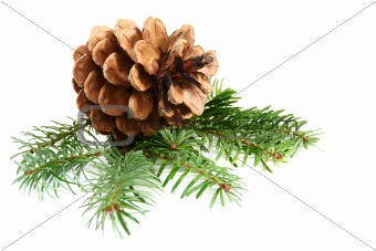 One pine cone with branch.