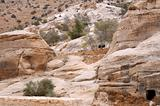 Sparse Vegetation in the Mountains of Petra