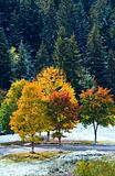 First winter snow and autumn colorful trees near mountain road