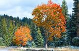First winter snow and autumn colorful foliage near mountain road